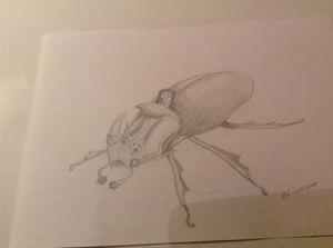 BeetleMount_NatasjaSondered